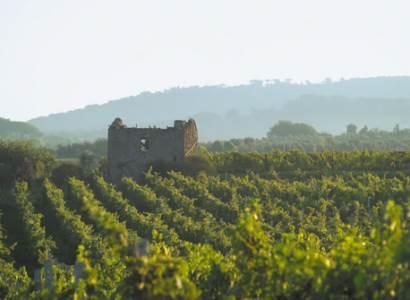 Agricoltura, Regione Lazio e Arsial sostengono la nascita della rete Vigne di Roma