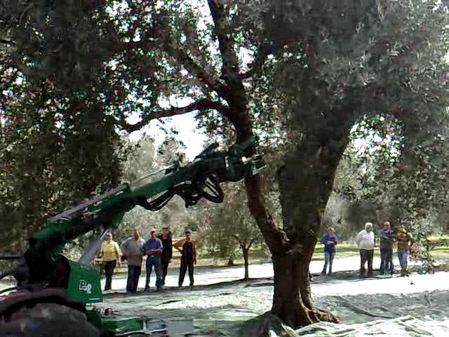 macchina raccogli olive
