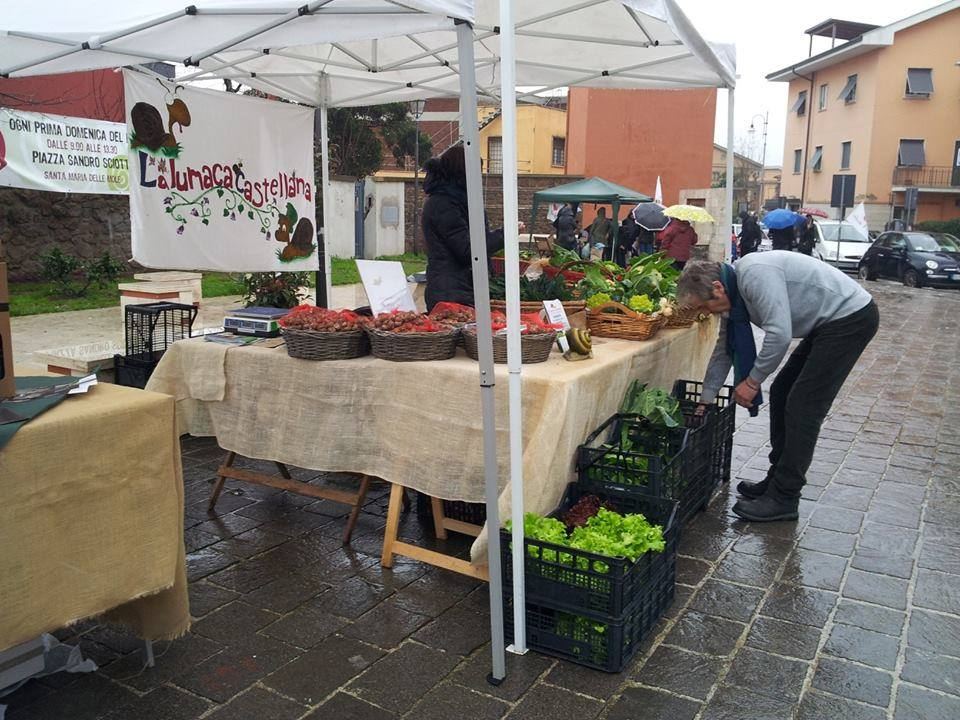 lumaca-al_mercato_ della_terra_a_Marino