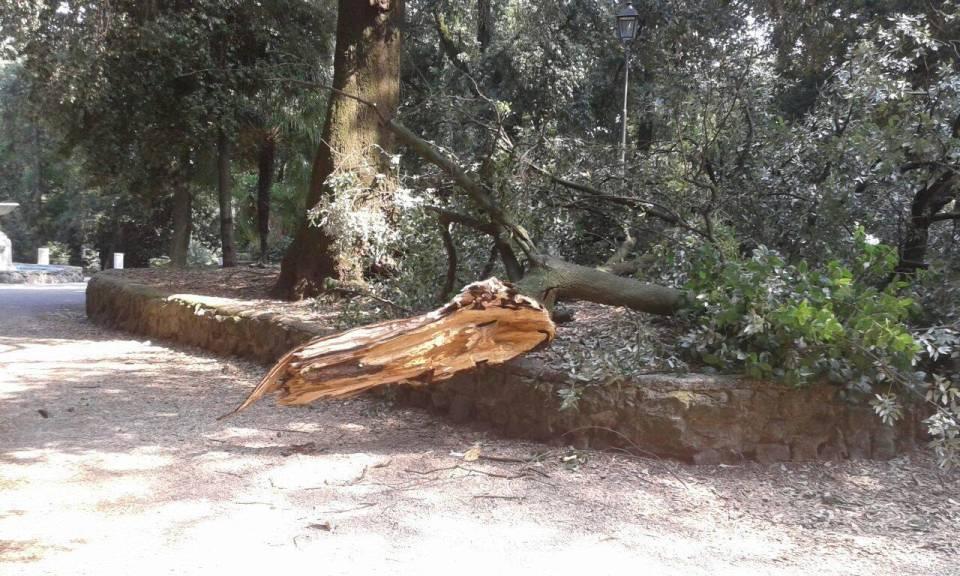 alberi_pericolanti_albano