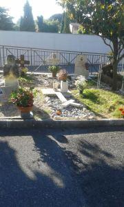 cimiterogenz5