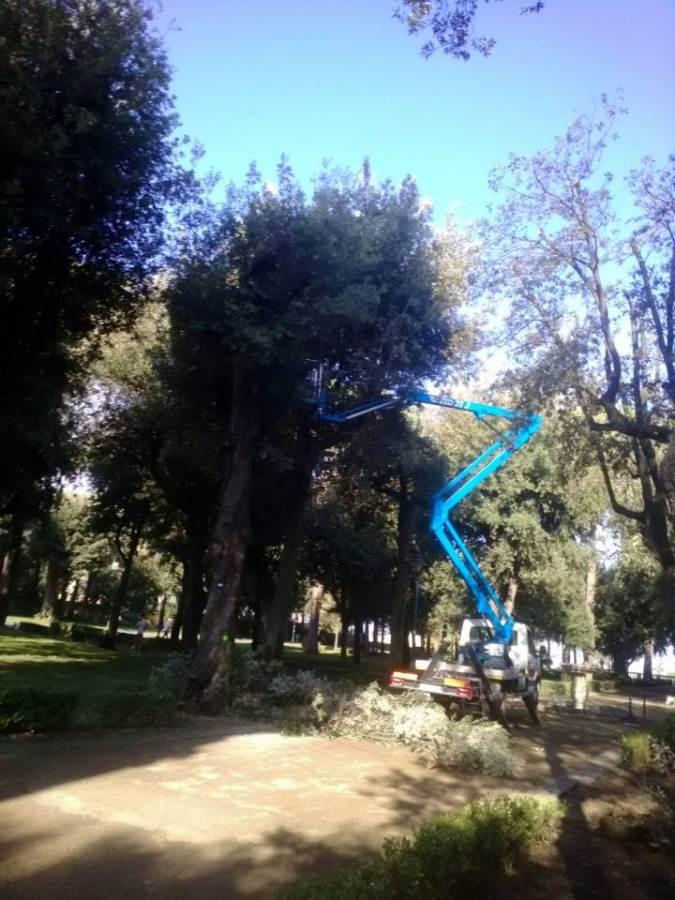 alberivillatorlonia
