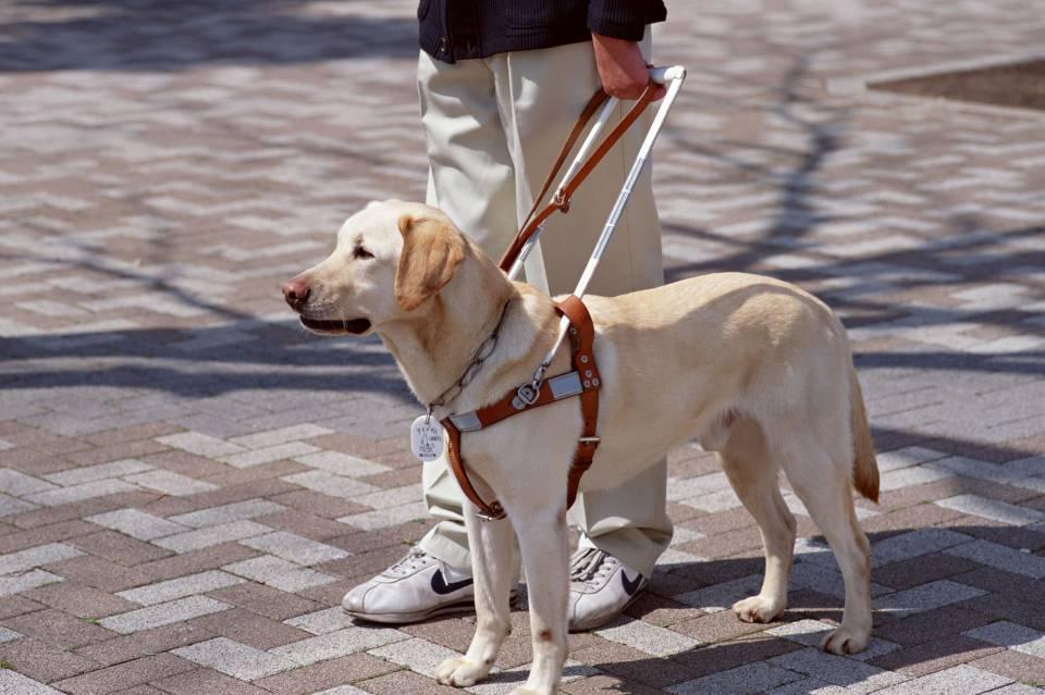 cane_guida_non_vedenti