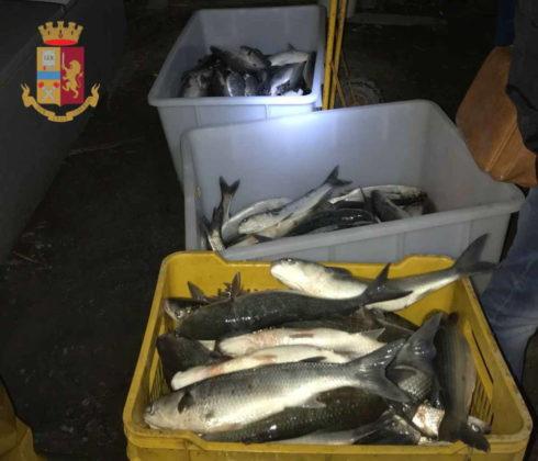 pesce_sequestrato