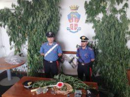 velletri_carabinieri_marijuana