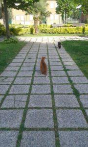 gatti_giardino