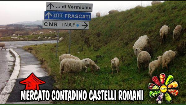 FrascatiMercatoContadino