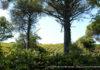 parco_castelli