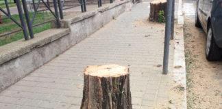 alberi_ciampino