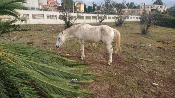 cavallo_malnutrito_ardea