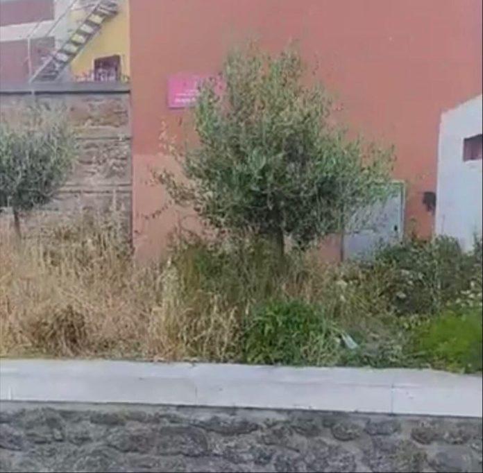 verde_piazza_sciotti_santa_maria_mole