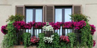 fiori_balcone