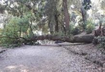 albero_caduto_villa_doria_11_08