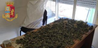 genzano_coltivava_marijuana_senza_autorizzazione