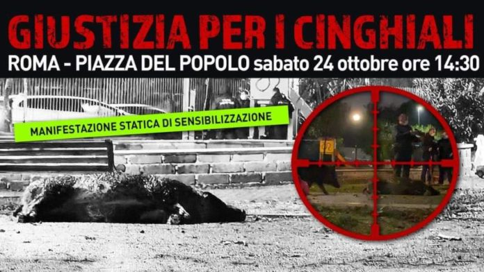 giustizia_cinghiali_roma