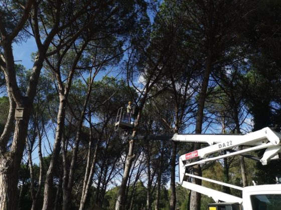 manutenzione_verde_pomezia